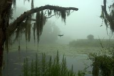 Creepy Swamp Fog Rolling In - Bing images Slytherin Aesthetic, Nature Aesthetic, Forest Fairy, Dark Forest, Dark Paradise, Faeries, Pretty Pictures, Aesthetic Pictures, Mists