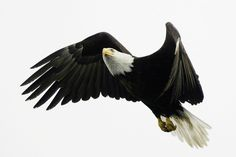 The Sky is No Longer Free for Animals ... Four People Died In Alaska After Their Plane Collided With A Bald Eagle It's believed to be the first time in the U.S. that people have been killed in a plane crash after an impact with America's national animal. Damn Shame !