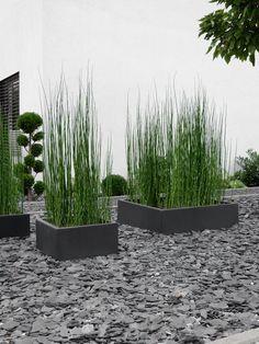 GARTEN Front garden design with horsetail Modern Garden Design, Backyard Garden Design, Landscape Design, Modern Landscaping, Front Yard Landscaping, Landscaping Ideas, Garden Projects, Garden Inspiration, Indoor Plants