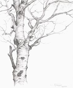 tree line drawing | Category: landscapes this could be another take on family tree. Would be really interesting if I showed us as part of family moving back and forth!!!