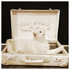 This is a flea Market Find! An old trunk which is painted with white colour. The french line means Cat Dreams! And our Cat Oliver lives in it!