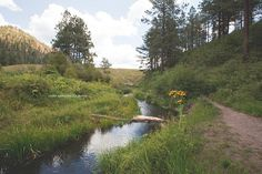 A stream in the Jemez Mountains