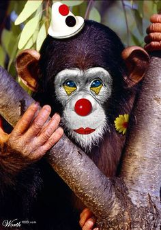 Every time you feel yourself getting drawn into other people's nonsense, repeat these words Not my circus, Not my monkey (polish proverbs) Just cause you got the monkey off your back doesn't mean that the circus has left town.  Entertain a clown & you become part of their circus..... #message