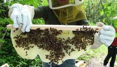 Simple home-beekeeping method--more traditional, natural, and a way to support our bee population.