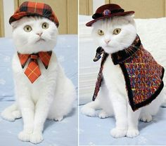 Google image search crochet cat clothes
