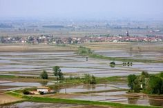 Rice Fields and Old Italian Cities