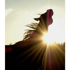 horse silhouettes ❤ liked on Polyvore