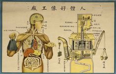 Retro Educational Posters Reimagine The Human Body As A Factory