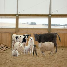 A Day at a Farm With Rob MacInnis Evelyne Politanoff