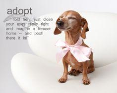 #Bethechange...#adopt!
