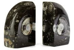 Pair of Ammonite Fossil Bookends | The Lovely Library | One Kings Lane