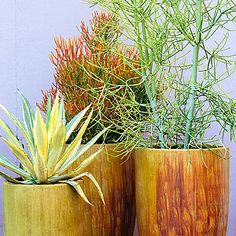 Bigger, better - Container Designs with Succulent Plants - Sunset