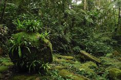 Parque Nacional da Serra da Bocaina (São Paulo, Rio de Janeiro) - trilhas para fazer a pé pelo mundo