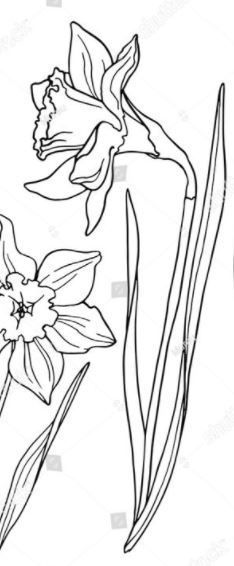 Wonderful Photos Daffodils line drawing Concepts Daffodils undoubtedly are a joyful spring flower, announcing the welcome arrival of lighter mornings Line Drawing Tattoos, Tattoo Drawings, Daffodil Bulbs, Daffodils, Planting Bulbs, Spring Flowers, Perennials, Modern Design, Bloom