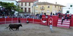 Santacara: Vacas Hermanos Arriazu - Recortador Jesulín Alvare...