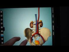 3D anatomie pro tablety