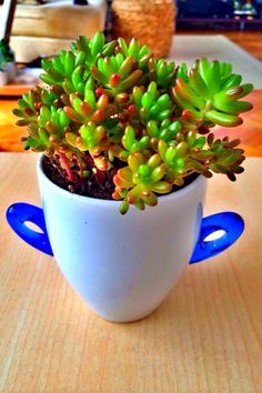 Succulents in a ceramic pot