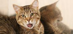 Os gatos são animais dotados de forte espiritualidade e dão sinais sutis de seus poderes. Aprenda como interpretar os sinais de espiritualidade dos gatos.