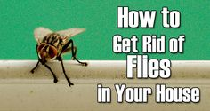 13 Natural Remedies to Get Rid of Flies (Housefly)