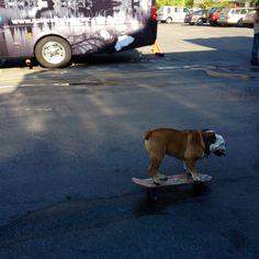 Tillman rides his skateboard at #BlogPaws follow me!