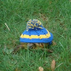 Beanie Hat - Pick Your Colors - Tortoise Cozy - Made To Order