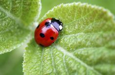 Why Do Ladybugs Have Spots?