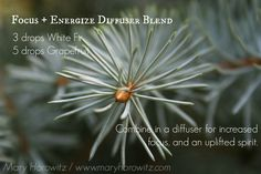 White Fir + Grapefruit Diffuser Blend for focus + energy. From maryhorowitz.com