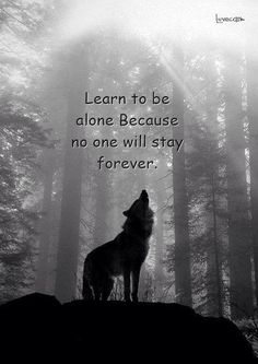 Wolf Gurus is the number 1 eCommerce site about wolf. until today we sell about Item About wolf, native america, viking, dream catcher. Badass Quotes, Wisdom Quotes, True Quotes, Great Quotes, Motivational Quotes, Inspirational Quotes, Lone Wolf Quotes, Wolf Qoutes, Warrior Quotes