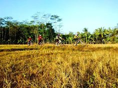 good morning! time to prepare your bike again :) || thanks to @phodhipo for this nice picture you hit it again man! :D  #pacificbikerider #pacificbikes #spacification #sepeda #sepedagunung #mountainbike #mtbindonesia #ricefield #offroad #hardtail #sawah #selamatpagi #rumput #kering