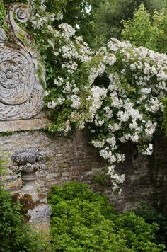 Rosa, climbing roses on ornamental stone wall, formal French garden.