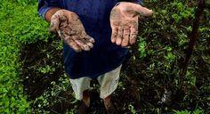 BLOG DO IRINEU MESSIAS: Os 340 nomes flagrados por trabalho escravo