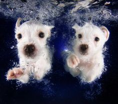Pringles and Pickme, both 8-week-old terrier mixes, swimming.