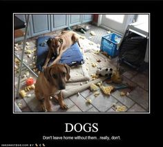 Funny Pictures with Captions | Funny dog photo with caption dogs don't leave home without them