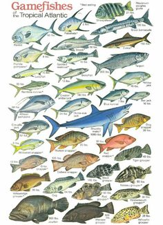 Tropical fishing chart