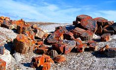 The Petrified Forest in Arizona! http://gypsynester.com/az.htm