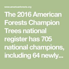 The 2016 American Forests Champion Trees national register has 705 national champions, including 64 newly crowned champions and co-champions. The national register has basic and advanced search features that allow you to search by species, measurements, location and total points.
