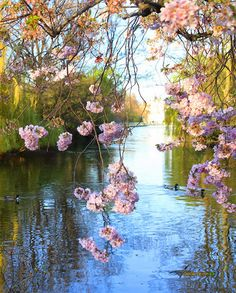 Spring – Deb M. Spring Pictures, Pretty Pictures, Bunch Of Flowers, Pretty Flowers, Spring Wallpaper, Spring Landscape, Landscape Pictures, Amazing Pics, Flowering Trees