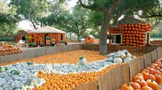 Pumpkin Village in the Pecan Grove Dallas Arboretum Pumpkin Patch Dallas, Pumpkin Patches, Columbus Day Weekend, Pumpkin House, Dallas Arboretum, Fall Pictures, Family Activities, Botanical Gardens, Lawn