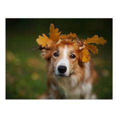 Red Border Collie, Beautiful Creatures, Animals Beautiful, Cute Animals, Hello Beautiful, Beautiful Dogs, Beautiful Images, Funny Animals, Border Collie Vermelho