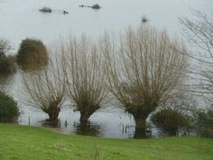 Nothing to do with The Willow Man, but everything to do with the landscape of the Levels - floods: taken just after Christmas near Burrowbridge.