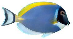 Hanauma Bay Snorkeling - Bay Hours, Pricing and Activities State Parks, Hanauma Bay, Marine Ecosystem, Oahu Hawaii, Tropical Fish, Snorkeling, Art Google, Under The Sea, The Good Place