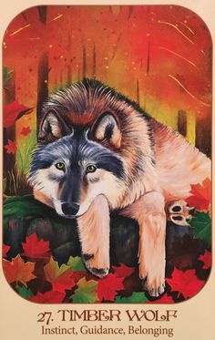 """Daily Angel Oracle Card: Timber Wolf, from the Animal Voices Oracle Card deck, by Chip Richards Timber Wolf: """"Instinct ~ Guidance ~ Belonging"""" The Gift: """"Native Americans honor Wolf's great instinc..."""