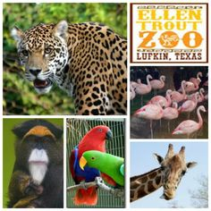The Ellen Trout Zoo in Lufkin, TX is home to over 700 animals and has received numerous state and national awards. http://blog.tourtexas.com/blog/the-texas-travelin-man-2/lufkin-tx-and-the-ellen-trout-zoo