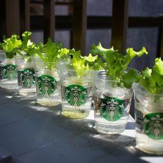屋内でもできる水耕栽培をご紹介。美味しい野菜が自宅で作れる | iemo[イエモ]
