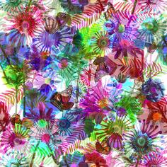 floral borboletário