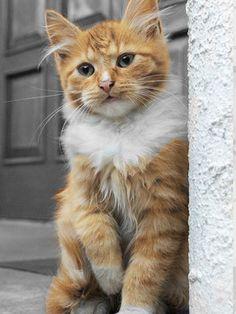I love this cute cat