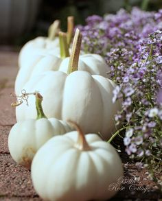 When we bought this house we had a big half acre of nothing, not a plant in sight. White Pumpkin Decor, Pumpkin Farm, White Pumpkins, It's The Great Pumpkin, Autumn Scenes, Bella Rose, Rose Cottage, Autumn Day, Pumpkin Decorating