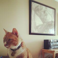 #gato @ruben_i- #webstagram