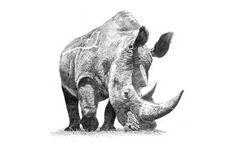 http://www.aaronkeck.com/images/rhino_art.jpg