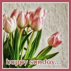 Sunday Sonntag  Flowers Tulpen